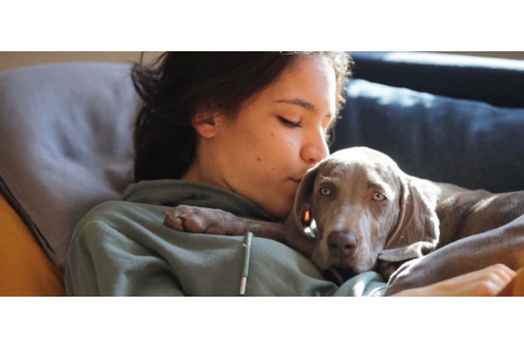 Trčanje sa psom - kako, kada, koliko